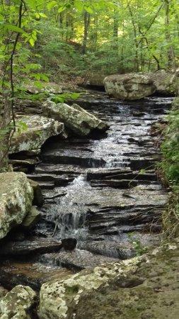 Heber Springs, AR: Mossy Bluff Buckeye Trail