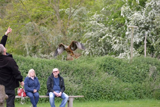 Huby, UK: A bird of prey returns after its flight