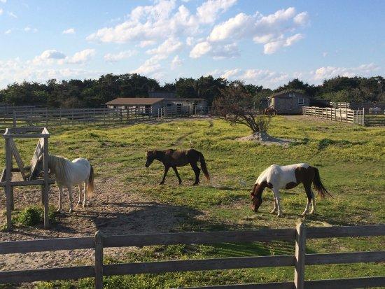 Ocracoke, NC: photo0.jpg