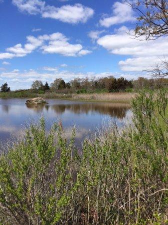 Madison, CT: Salt marsh