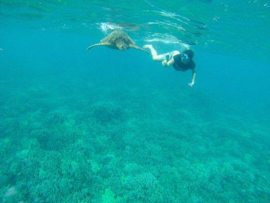 Hawaiian Paddle Sports: photo0.jpg