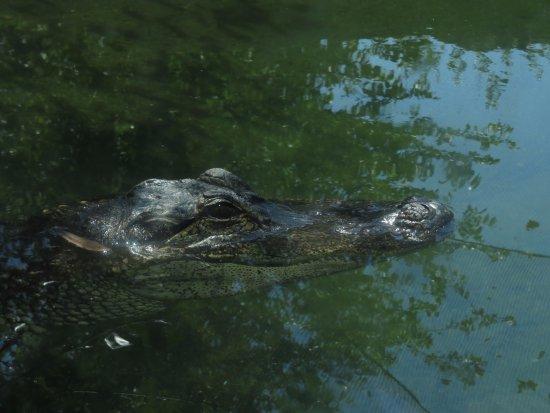 Cameron Park Zoo: He seemed friendly!