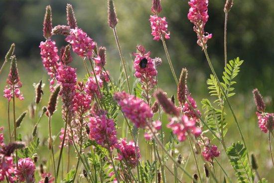 Isaba, Spain: Flores silvestres de primera en el valle del roncal