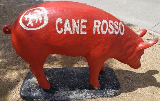 Fairview, TX: piggie out front