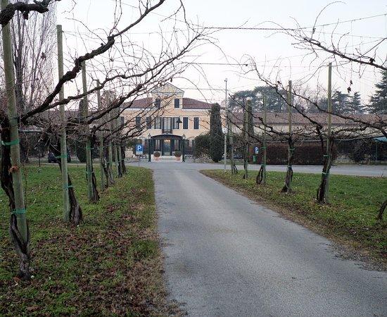 Ponzano Veneto, Italien: Tra i filari di vite a gennaio