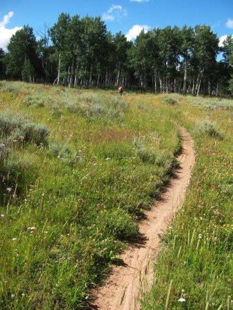 Fruita, CO: Ride from desert to Aspen groves on one of our hut trips