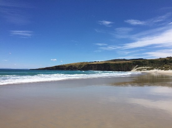 Beach at otago peninsula