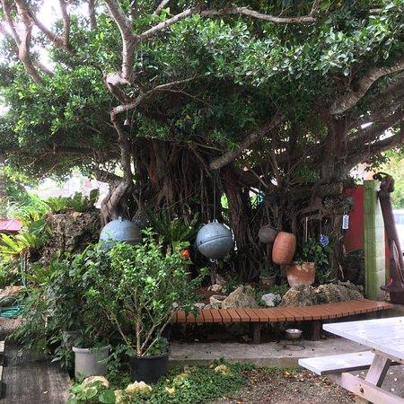 大きなガジュマルの樹があります。