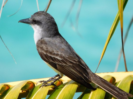 Rostrevor Hotel: Kingbird liked to sit outside our balcony