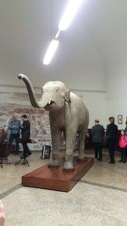 Museo di Storia Naturale dell'Università di Pavia