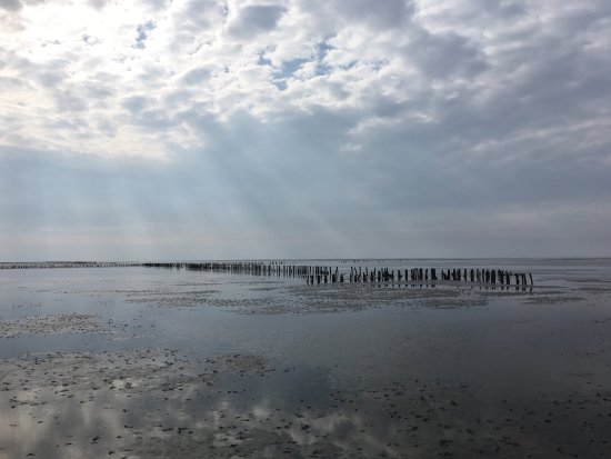 Pieterburen, Hollanda: Zwerftocht in mei