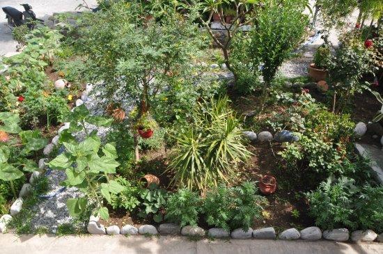 Agia Roumeli, Hellas: garden