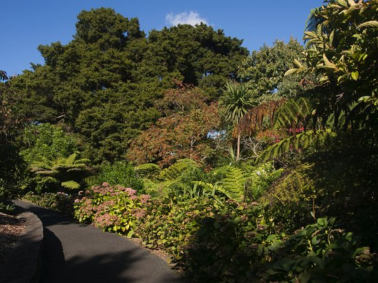 Auckland Region, New Zealand: Garden path.