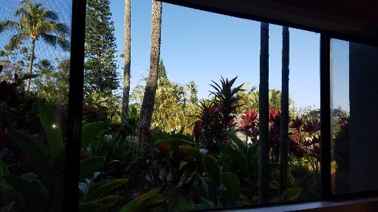 The Gardens at West Maui Hotel: 20170418_073629_large.jpg