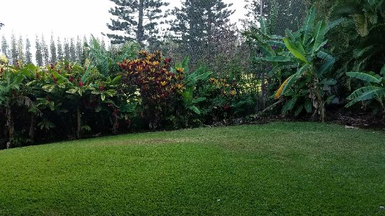 The Gardens at West Maui Hotel: 20170418_073553_large.jpg