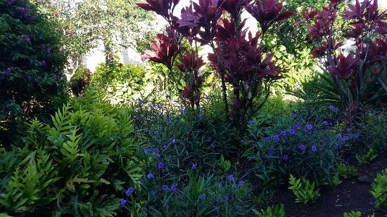 The Gardens at West Maui Hotel: 20170418_081719_large.jpg
