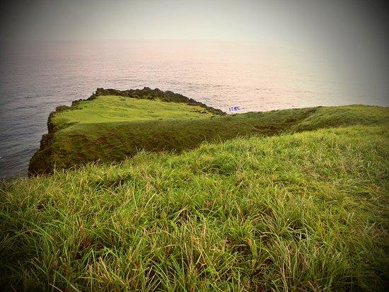 Cing Cing Grass