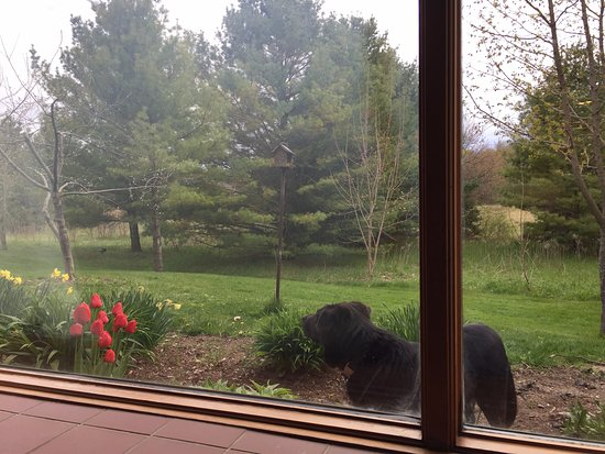 Door County Cottages: View out the living room window