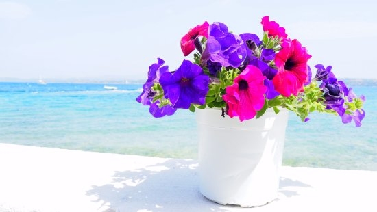 YachtSailing.gr / Charter Sailing Greece: colors in brilliant sunshine in spetses