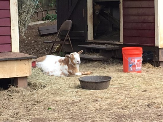 Zdjęcie The Social Goat Bed & Breakfast