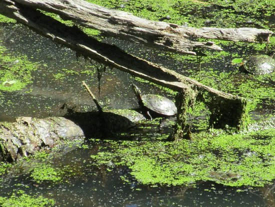Potomac, MD: Like the green stuff in the water
