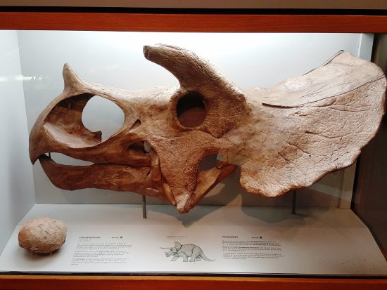 Pink Palace Museum: Museum Exhibit - Triceratops Skull and Dinosaur Egg