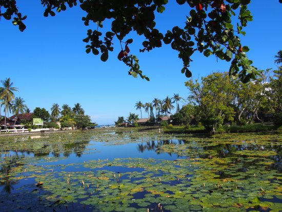 Candidasa, Indonesia: 広い蓮池