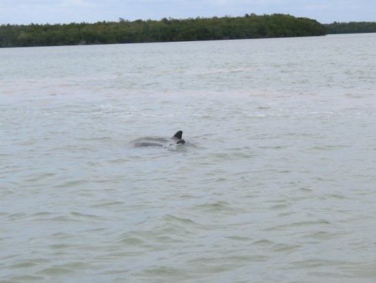 Davie, FL: Mom and baby playing behind our boat