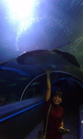 Bang Lamung, Thailand: manta ray