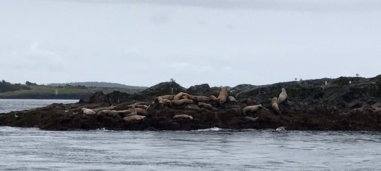 Western Prince Whale & Wildlife Tours: photo0.jpg