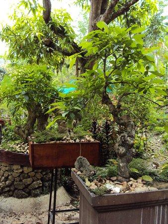 More Bonsai Trees Picture Of Durano Eco Farm Spring Resort Cebu City Tripadvisor
