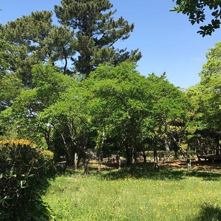 Halla Arboretum: photo3.jpg