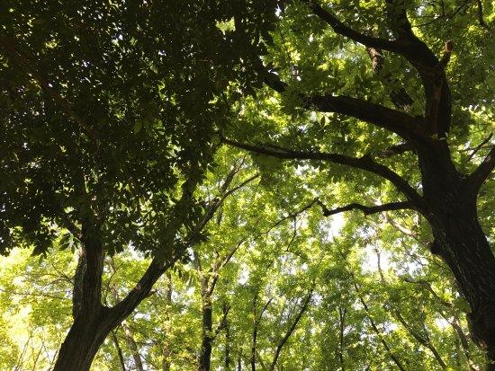 Halla Arboretum: photo4.jpg