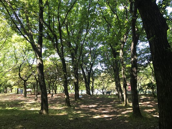 Halla Arboretum: photo5.jpg