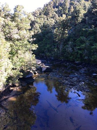 Abel Tasman National Park, Nueva Zelanda: Swing Bridge