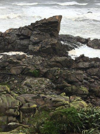 Westport, Новая Зеландия: Seals
