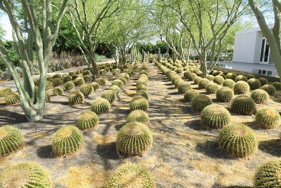 Sunnylands : Cactus