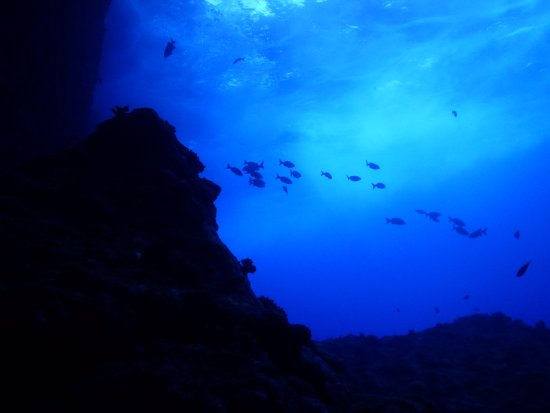 Axe Murderer Dive Tours: View from below, diving at the Grotto.