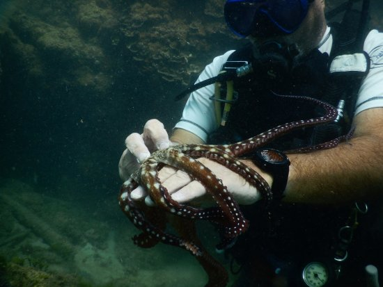 Axe Murderer Dive Tours: Harry showing me how to tickle an octopus.