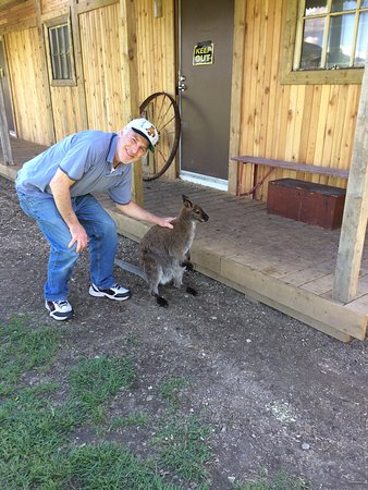 Lake Country, Canadá: Yes, you can pet (only on back, one direction) the Kangaroo / Wallaby.