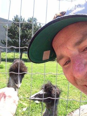 Lake Country, Canadá: An Emu or Two, A twig for Two, It's nice to see you