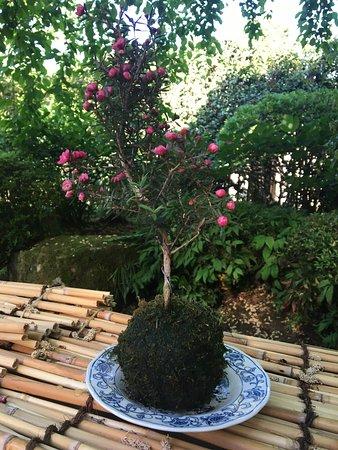 Toshogu Shrine: photo7.jpg