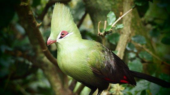 Birds of Eden: Many photo opportunities await you.