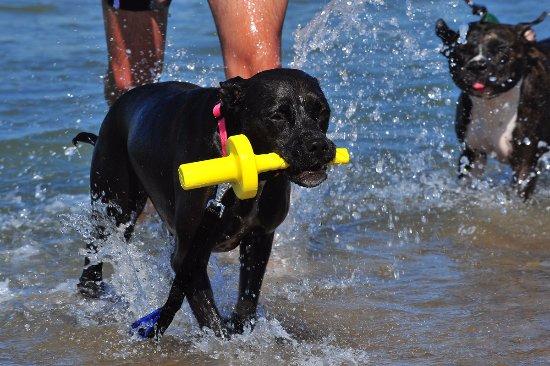 Dog Beach: acqua fun