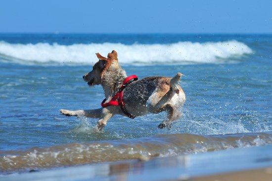 Dog Beach: mi tuffo