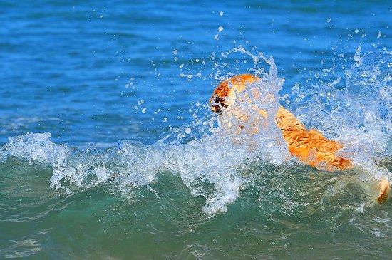 Dog Beach: mi tuffo anche io