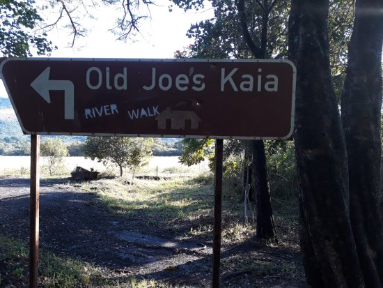 Old Joe's Kaia Photo