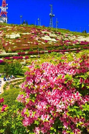 Hofu, Japan: 大平山山頂公園 展望