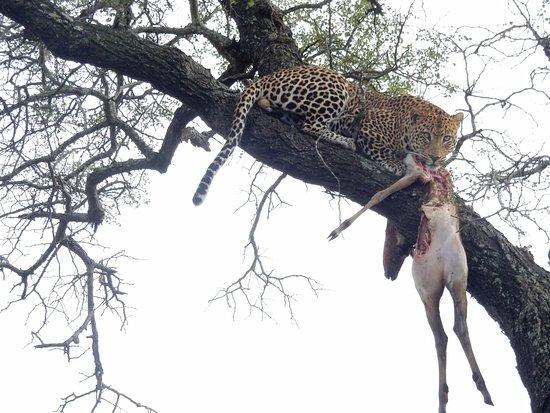 Honeyguide Tented Safari Camps-billede