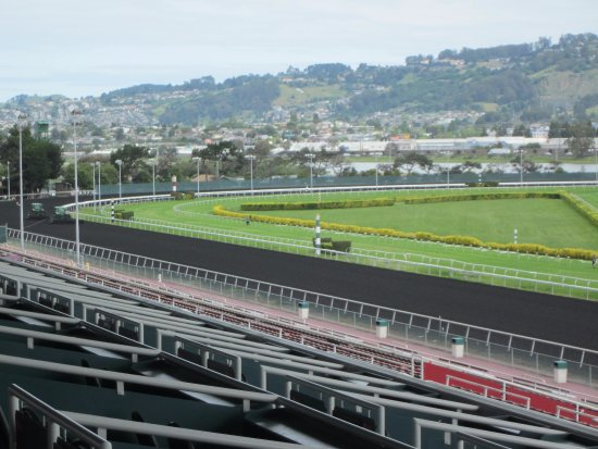 Golden Gate Fields: View from the grandstand